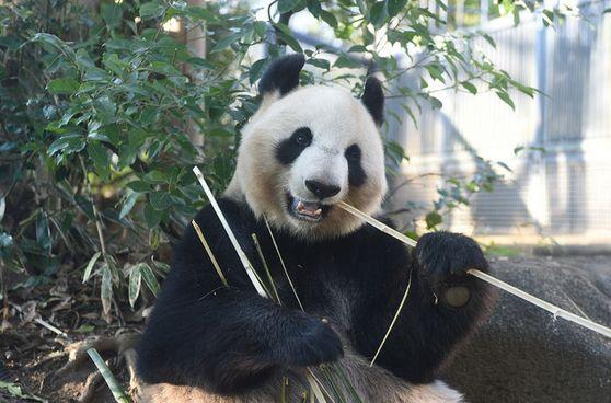 パンダのイメージ画像